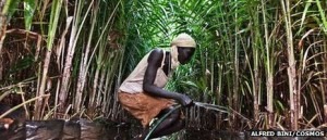 Ethiopian Abago could lose his village to a foreign-owned oil palm plantation