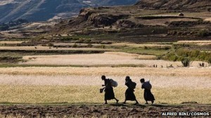 Small-scale farmers have been the backbone of African agriculture