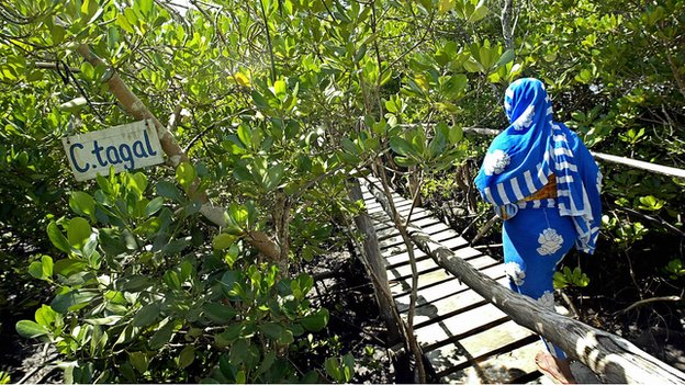 Kenya's mangrove forests are also a major draw for visitors