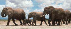 n-ELEPHANT-POACHING-large570