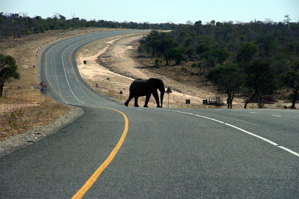 An elephants crosses the main highway leading to Zambia in Northern Botswana, in July.