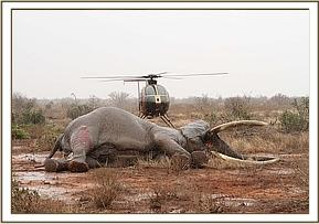 Photograph courtesy of DSWT