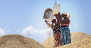 Singapore-listed Olam has planted 3,600ha of rice in Nigeria's Nasarawa State. Photo©Olam