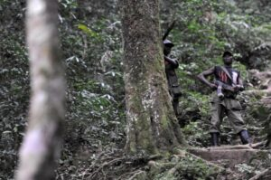Rwandan Hutu FDLR rebels stand guard in a dense forest on February 6, 2009 outside Pinga, 150 km northwest of Goma in DR Congo (AFP Photo/Lionel Healing)