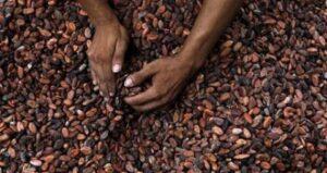 cocoabeansreuters480