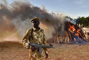 A Kenyan soldier stands near a burning pile of ivory at Nairobi National Park on March 3, 2015 (AFP Photo/Carl De Souza)