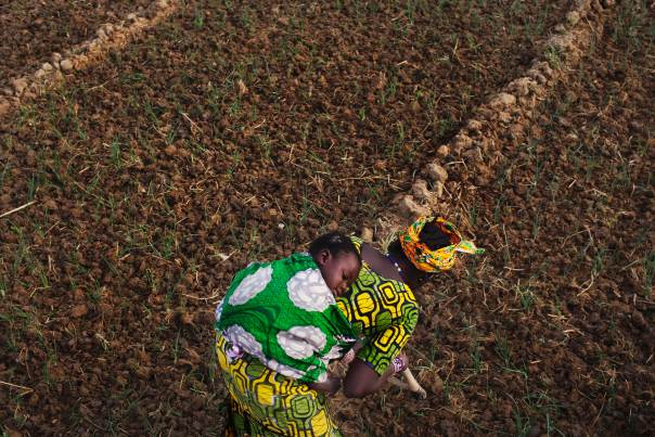 In a 2013 file photo, farmer Bintou Samake plants beans while carrying her son Mahamadou on her back at a farm in Heremakono, Mali. REUTERS/Joe Penney