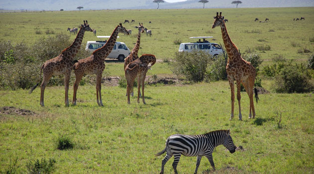 Kenya among top ten most searched tourism destinations online, globally/CFM