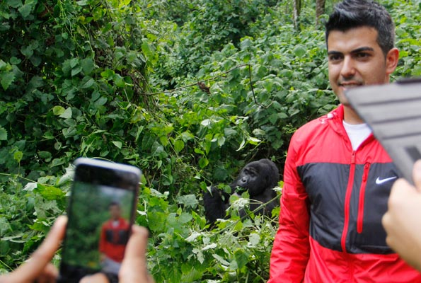 Barcelona Legend Rayco Garcia, takes a photo next to a mountain gorilla in Bwindi National Park during his and other team legends' visit to Uganda recently. Photo by Ismail Kezaala