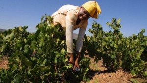 Thousands of agricultural jobs were under threat in the trade row