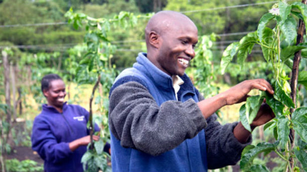 Isaac Kirior (right), chairman of the Tiret Self-Help Group, and member Eusila Lelei tend purple passion fruit vines in the highlands of western Kenya. TechnoServe is helping the farming cooperative to capitalize on this new market opportunity as part of Project Nurture, a partnership with The Coca-Cola Company and the Bill & Melinda Gates Foundation to double the fruit incomes of more than 50,000 small-scale mango and passion fruit farmers in Kenya and Uganda. Photo by: TechnoServe