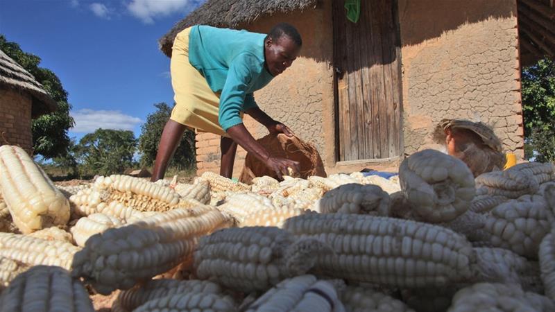 The food crisis in Zimbabwe is attracting global attention. Photo Tsvangirayi Mukwazhi/AP
