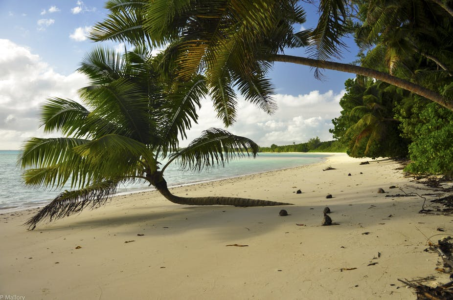 A beach on Diego Garcia, one of the Chagos Islands. Photo credit Stephen P. Mallory/Shutterstock