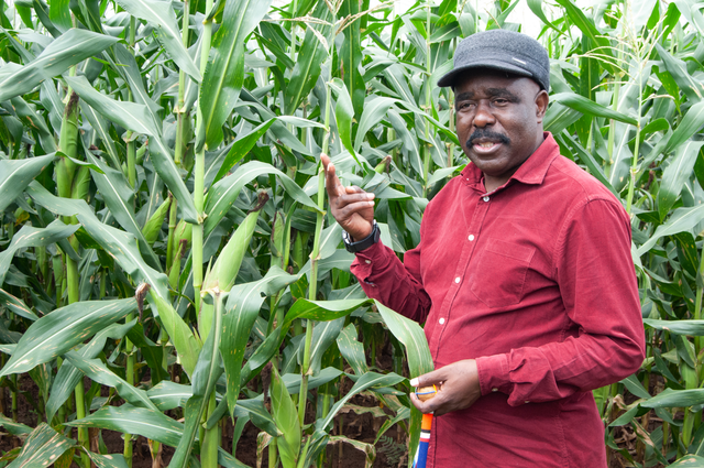 Chief Mumena, pictured here, is one of the beneficiaries of the training and technical support the Kansanshi Foundation under its Agricultural Livelihoods Project and has himself implemented it with great success